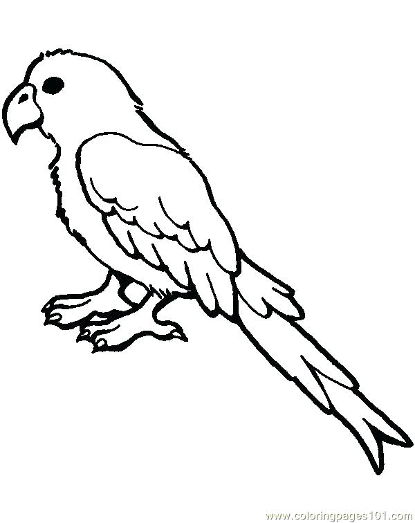 Cartoon Parrot Coloring Pages At Getdrawings Com Free For Personal