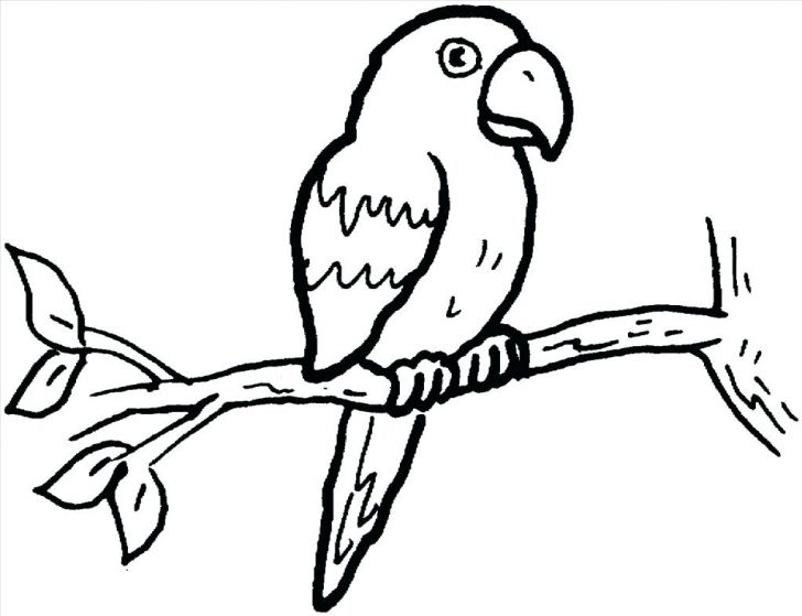 728x559 Delicious Chicken Drumstick Coloring Pages Parrot High Definition
