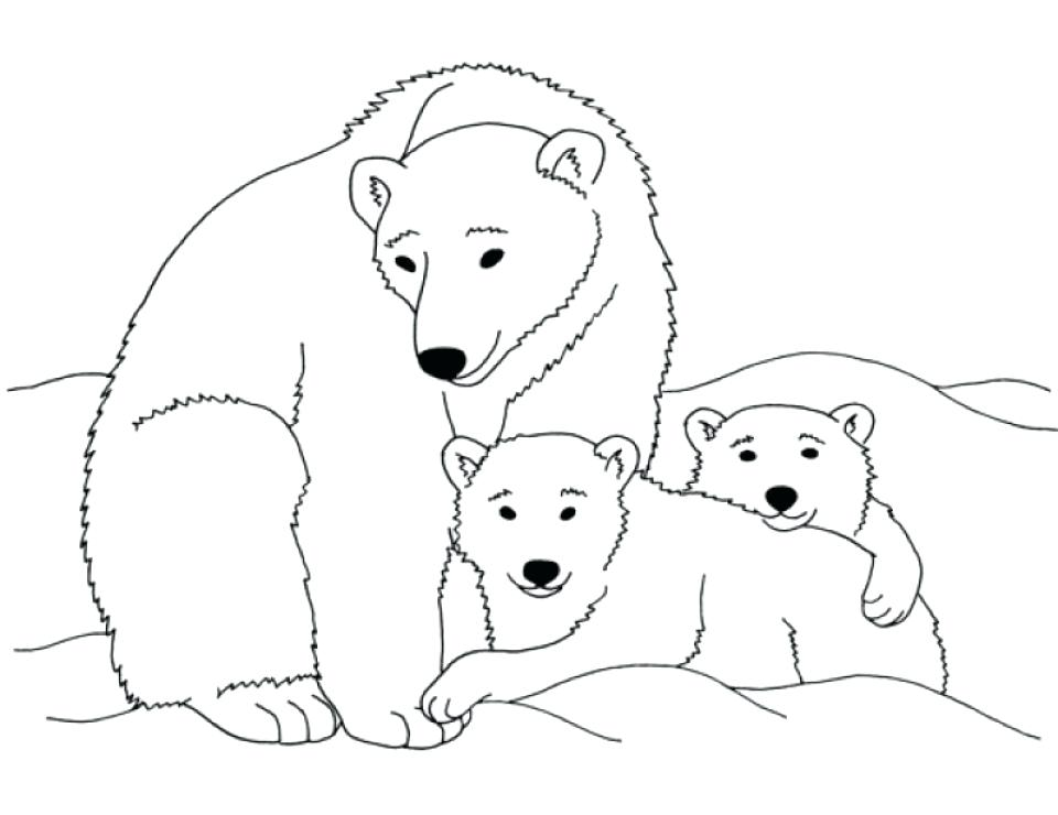 960x740 Polar Bear Coloring Pages Large Size Of Polar Bear Coloring Page