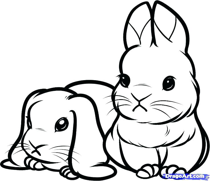 736x637 Bunny Coloring Pages Printable Of Bunnies As Well Print Color