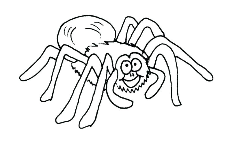 800x500 Itsy Bitsy Spider Coloring Sheets Spider Color Page Spider Web