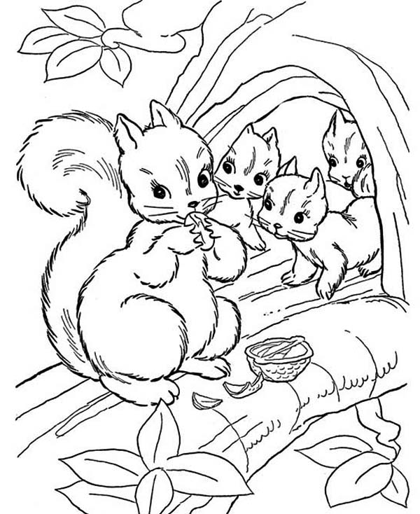 600x734 Free Coloring Pages Of Squirrels