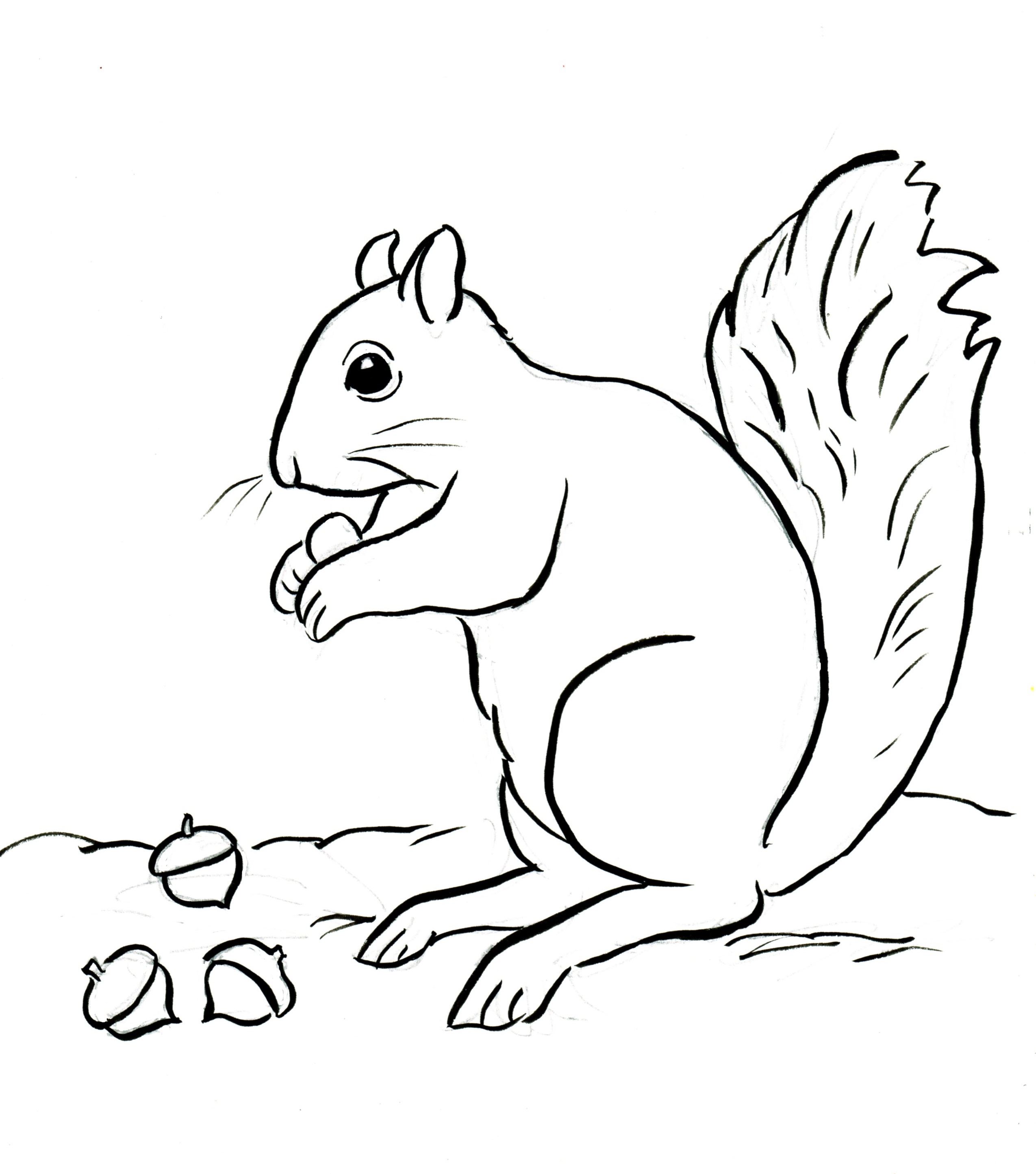 2549x2889 High Tech Free Coloring Pages Of Squirrels Image Result