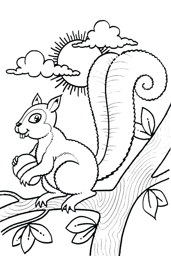 567x850 Scaredy Squirrel Coloring Pages