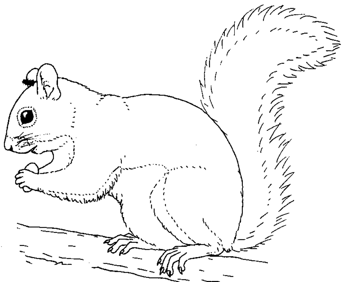 1450x1185 Stunning Printable Squirrel Coloring Pages About Squirrel Coloring