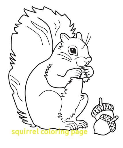 427x512 Gray Squirrel Coloring Page Squirrel Color Page Download