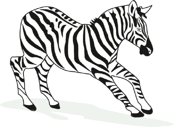 700x511 Zebra Pictures To Color With Free Printable Zebra Coloring Pages