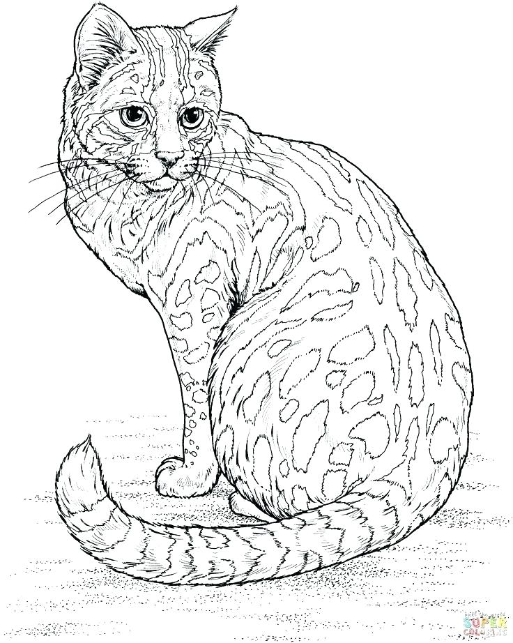 736x922 Free Cat Coloring Pages New Free Cat Coloring Pages Kids Calico