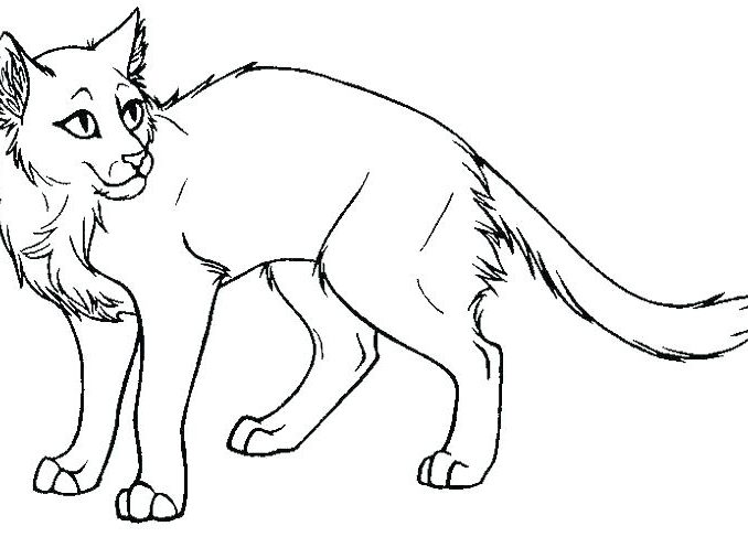 678x487 Warrior Cat Coloring Pages Coloring Pages Online Coloring Pages