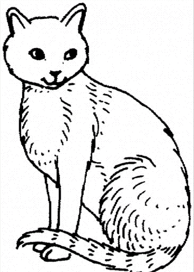 Cat Coloring Pages Printable Free