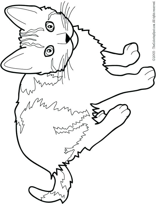 540x706 Amazing Cat Coloring Pages For Kids And Kitty Printable Cars