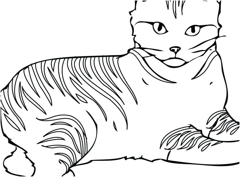 827x609 Cat Coloring Books Cat Coloring Pages Free Printable For Kids Cat