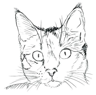 400x395 Cat Face Coloring Page Cat Face Coloring Page Drawn Cat Cat Head