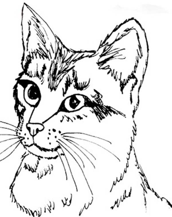 600x757 Realistis Kitty Cat Head Figure Coloring Page Kids Play Color