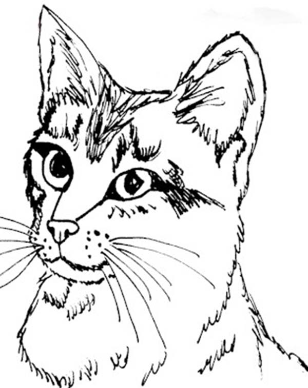 600x757 Cute Kitty Cat Coloring Pages Photo