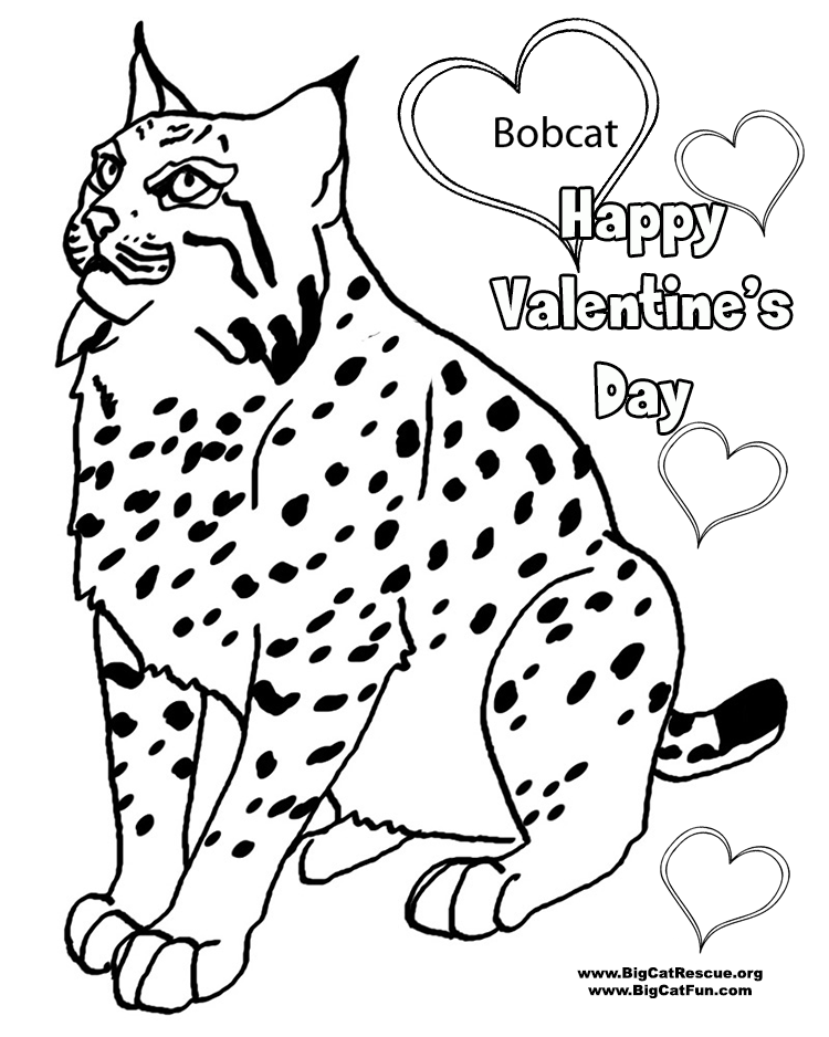 750x938 Bobcat Coloring Pages To Download And Print For Free