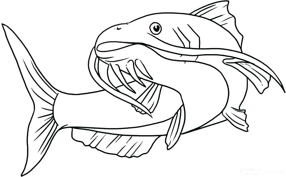 974x605 Catfish Coloring Page Catfish Coloring Page Seaweed Coloring Pages