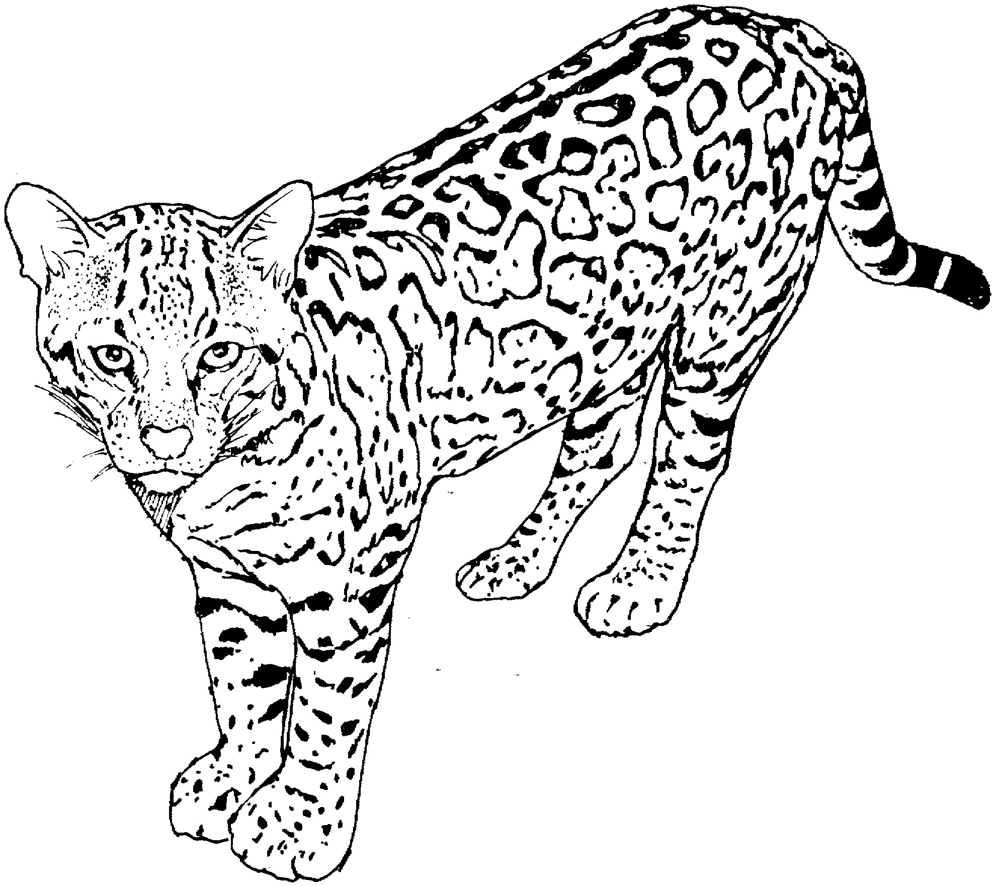 1978x1761 New Printable Coloring Pages For Adults Cats Copy Cat Coloring