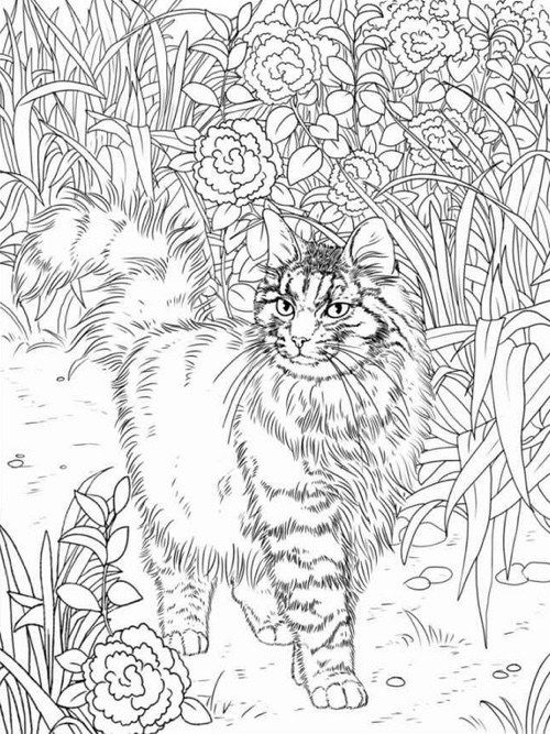 500x667 Online Coloring Pages For Adults Cats Art Cat Coloring Gallery One