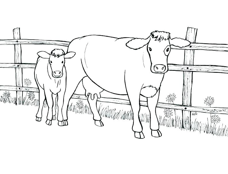 792x607 Cow Coloring Page Cow Coloring Page With Wallpaper Background
