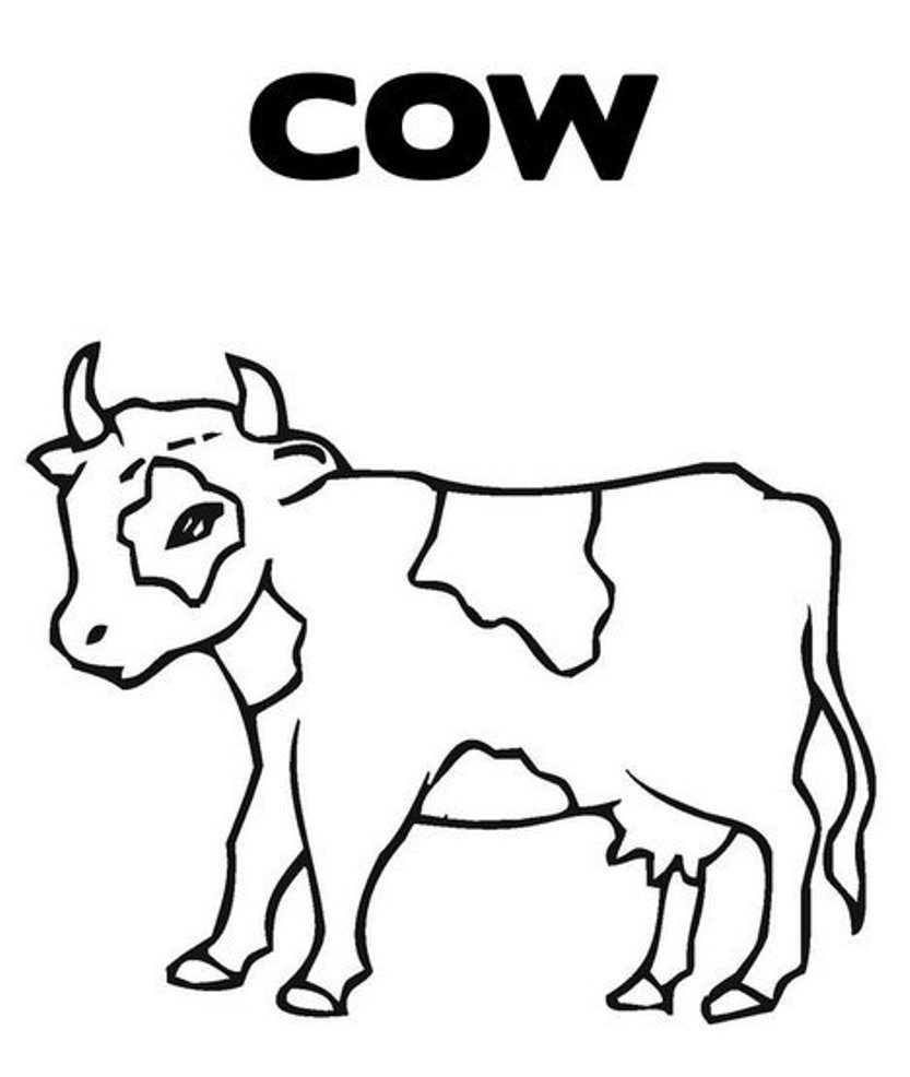 833x986 cow coloring page cute pages