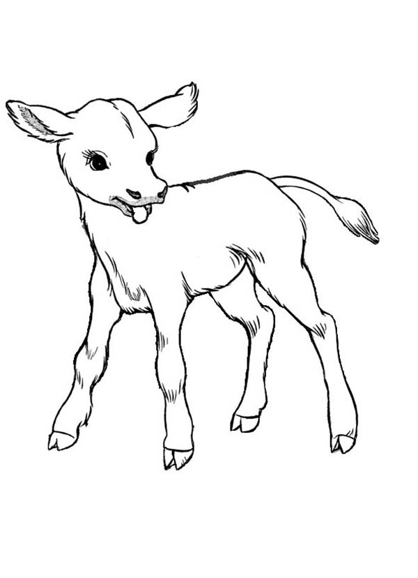 600x828 Drawn Cattle Color Many Interesting Cliparts
