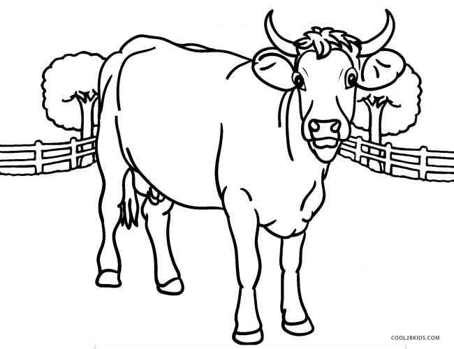 650x500 Free Printable Cow Coloring Pages For Kids