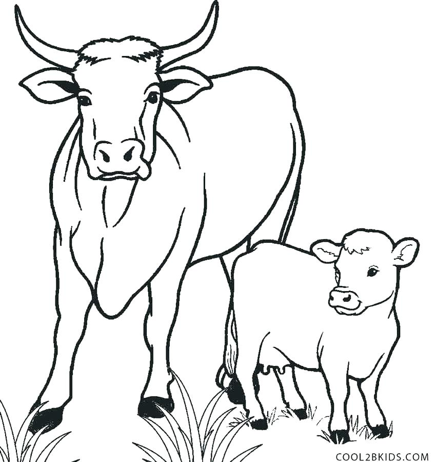 850x900 Coloring Pages Of Cows Cow Color Pages Cows Coloring Pages Color