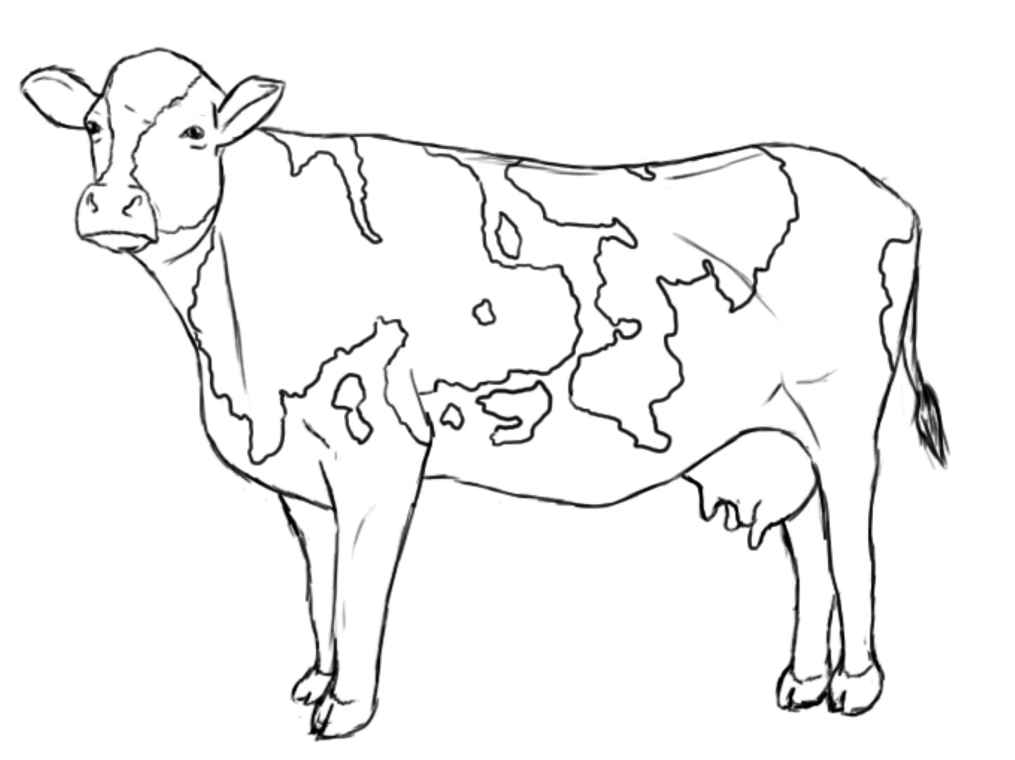 1443x1080 Cow Coloring Cattle Cows Pages Me