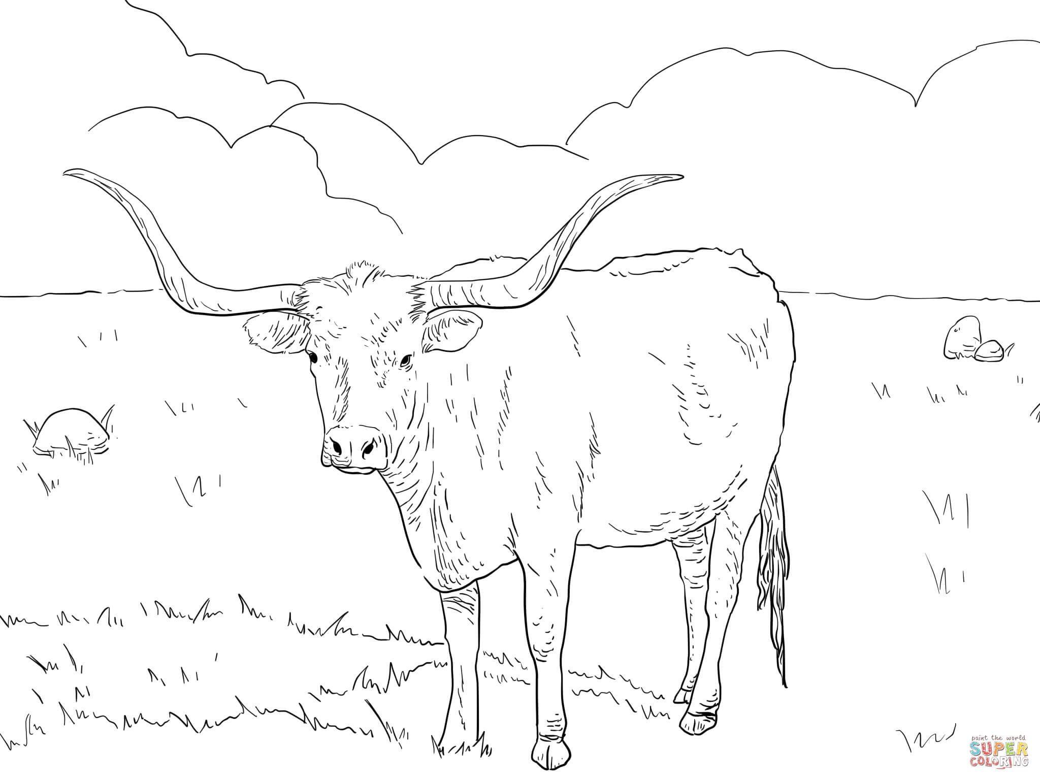 2048x1536 Texas Longhorn Cow Coloring Page From Longhorn Category Select