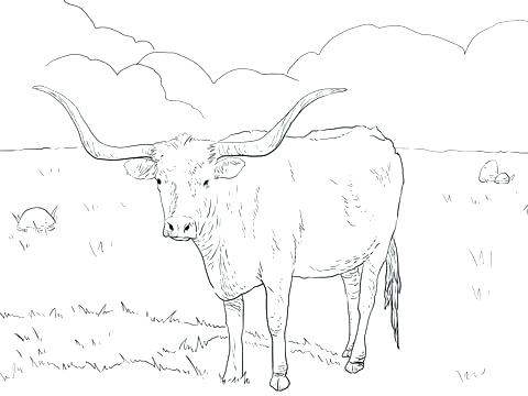 480x360 Cattle Coloring Pages Cattle Breed Coloring Pages Longhorn Cow