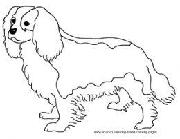 260x201 Cavalier King Charles Spaniel Coloring Page Crafts