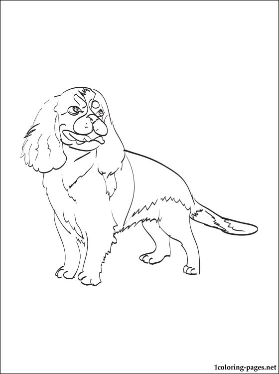 560x750 Cavalier King Charles Spaniel Coloring Page Coloring Pages