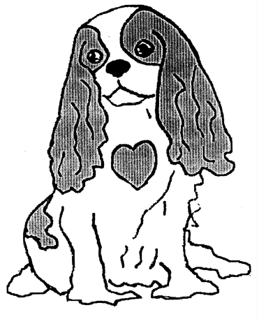 381x457 Mitral Valve Disease And The Cavalier King Charles Spaniel