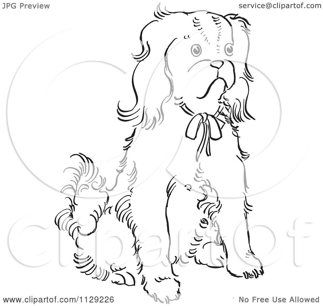 1080x1024 Cartoon Clipart Of An Outlined Cavalier King Charles Spaniel Dog