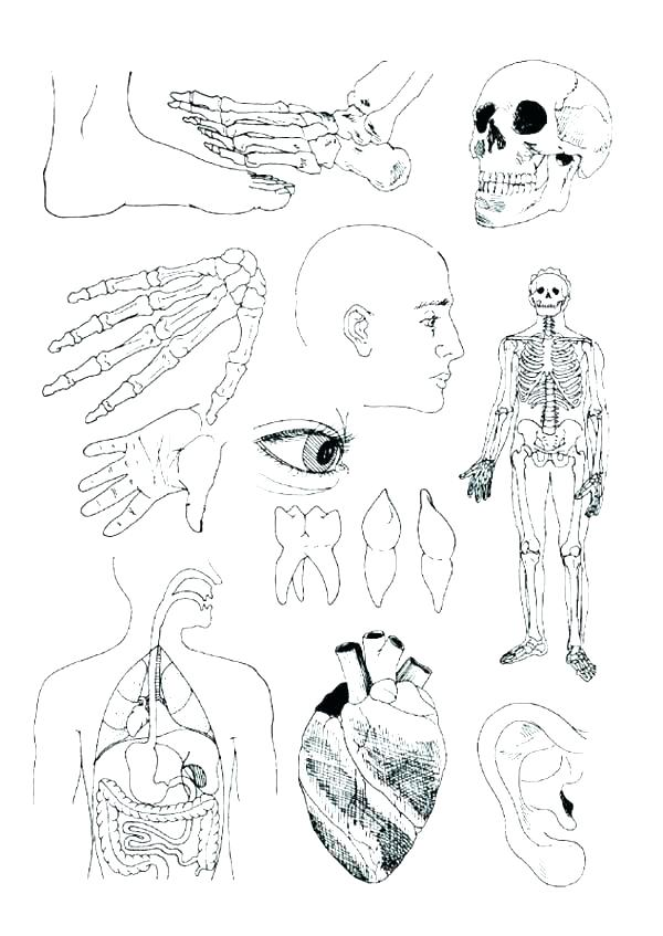600x847 Coloring Pages Blood Worksheet Answers Coloring Pages Blood