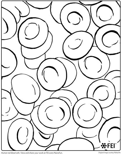 420x530 Red Blood Cell Coloring Page Laboratory Coloring Book