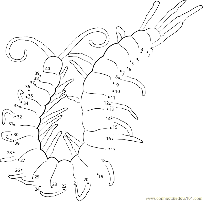 800x792 Centipede Dot To Printable Worksheet Connect The Dots Mexi
