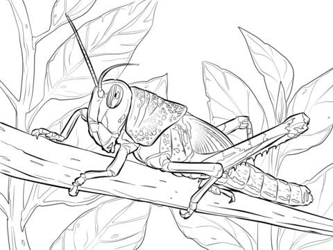 480x360 Centipede Coloring Page