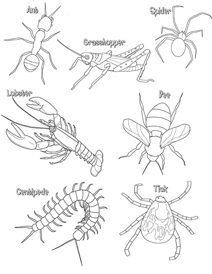 698x904 Arthropod Coloring