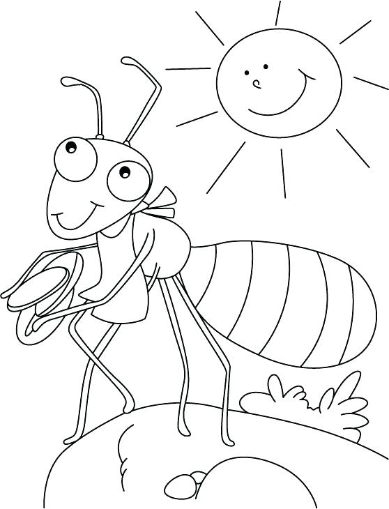 558x730 Anteater Coloring Page Centipede And Ants Coloring Pages Centipede