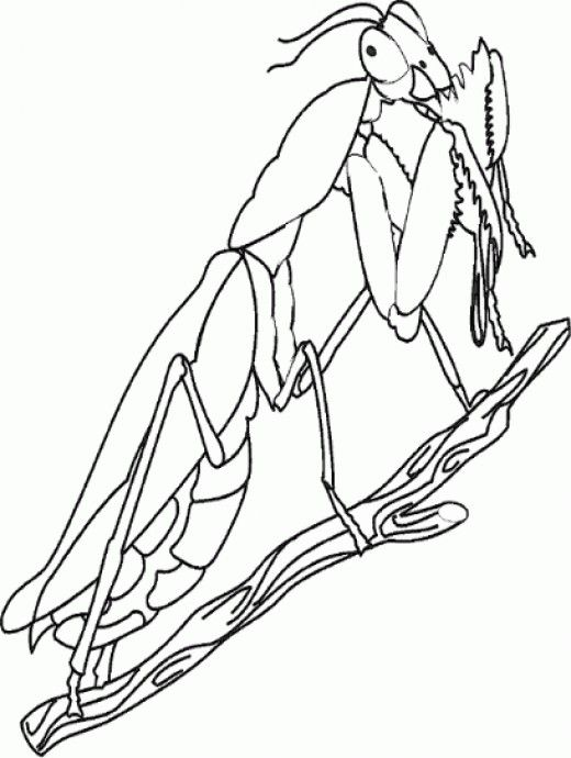 520x690 Bug Insect Coloring Pages Sheets Insects, Centipedes