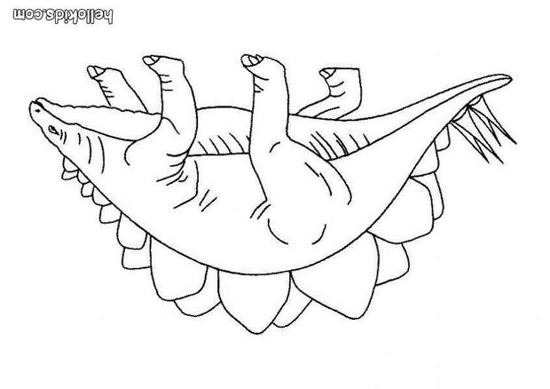 620x438 Stegosaurus Coloring Pages