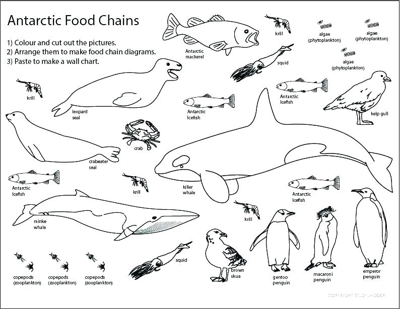 794x614 Food Web Coloring Pages Food Chain Coloring Sheets Food Chain