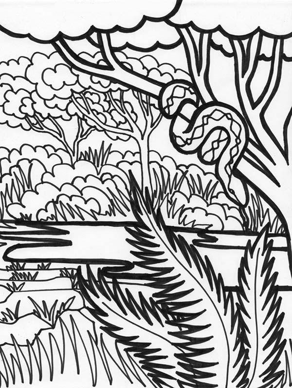 600x796 Rainforest Coloring Pages