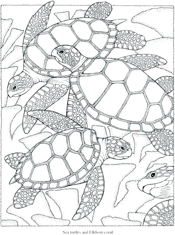 600x806 Challenging Coloring Pages Hard Coloring Pages Challenging