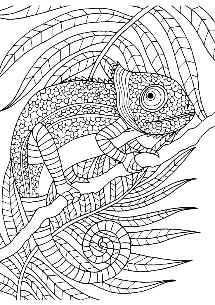 Chameleon Coloring Pages To Print At Getdrawings Com Free For
