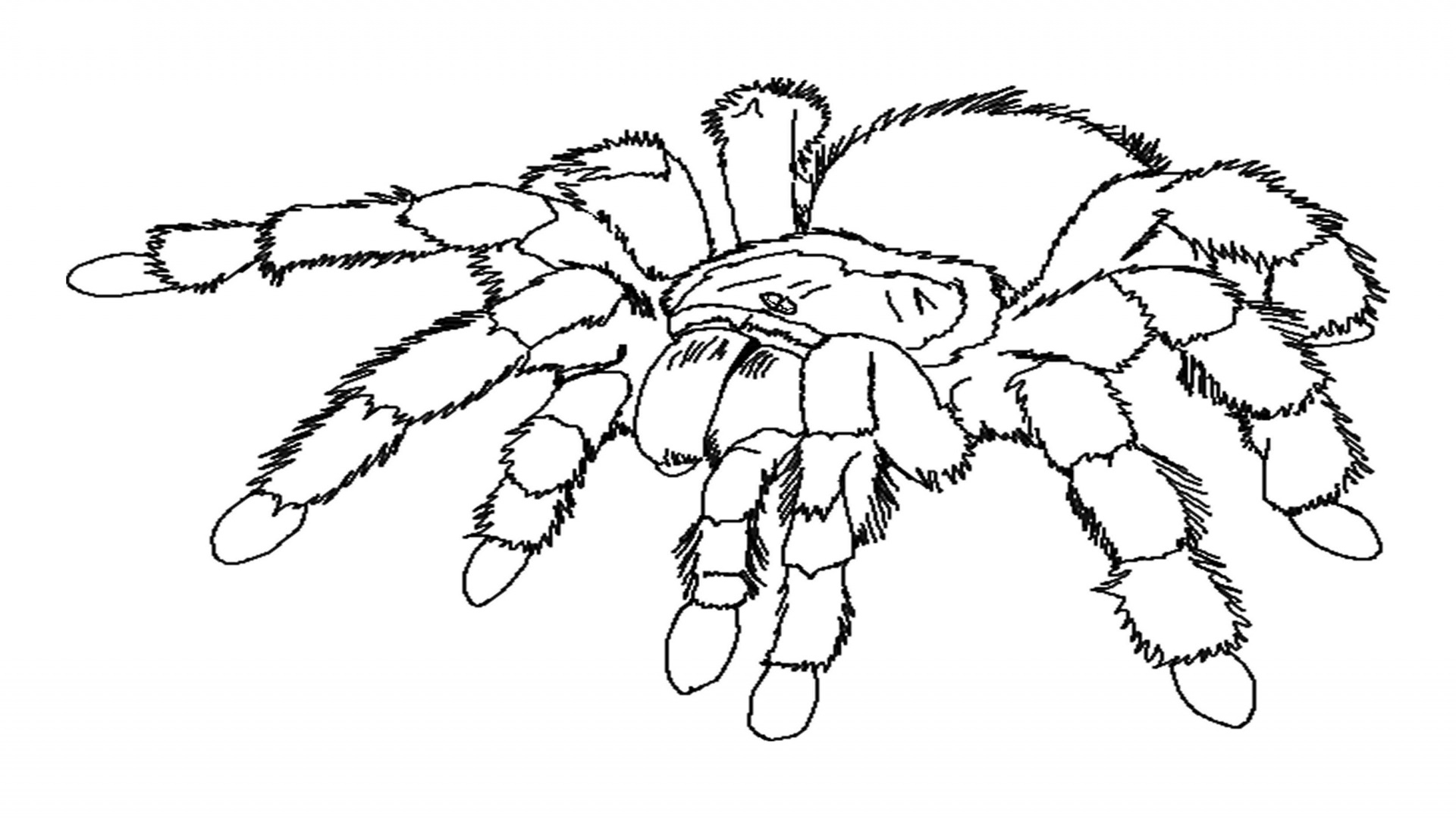 1920x1080 Spider Coloring Page Top Spider Coloring Pages Free Gallery