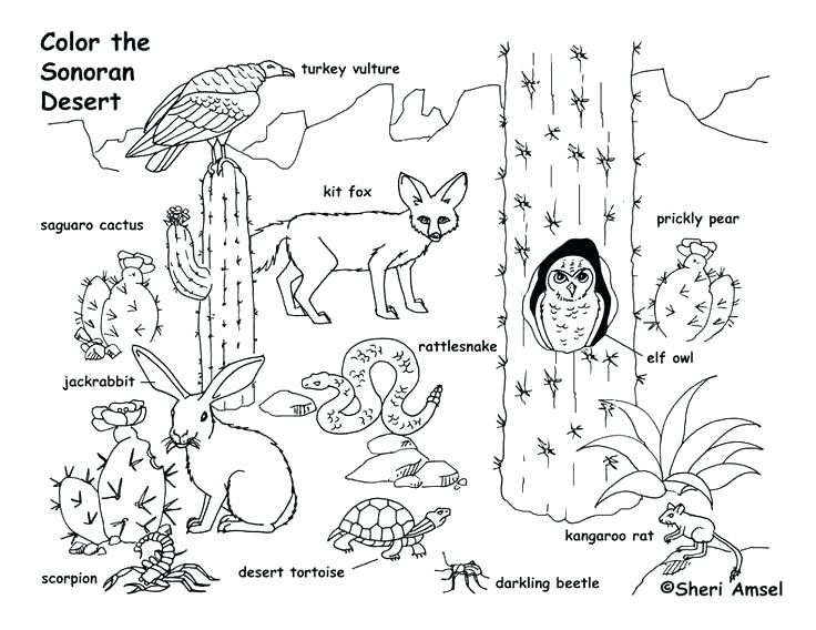 736x568 Charlottes Web Coloring Pages Food Web Coloring Worksheet Food