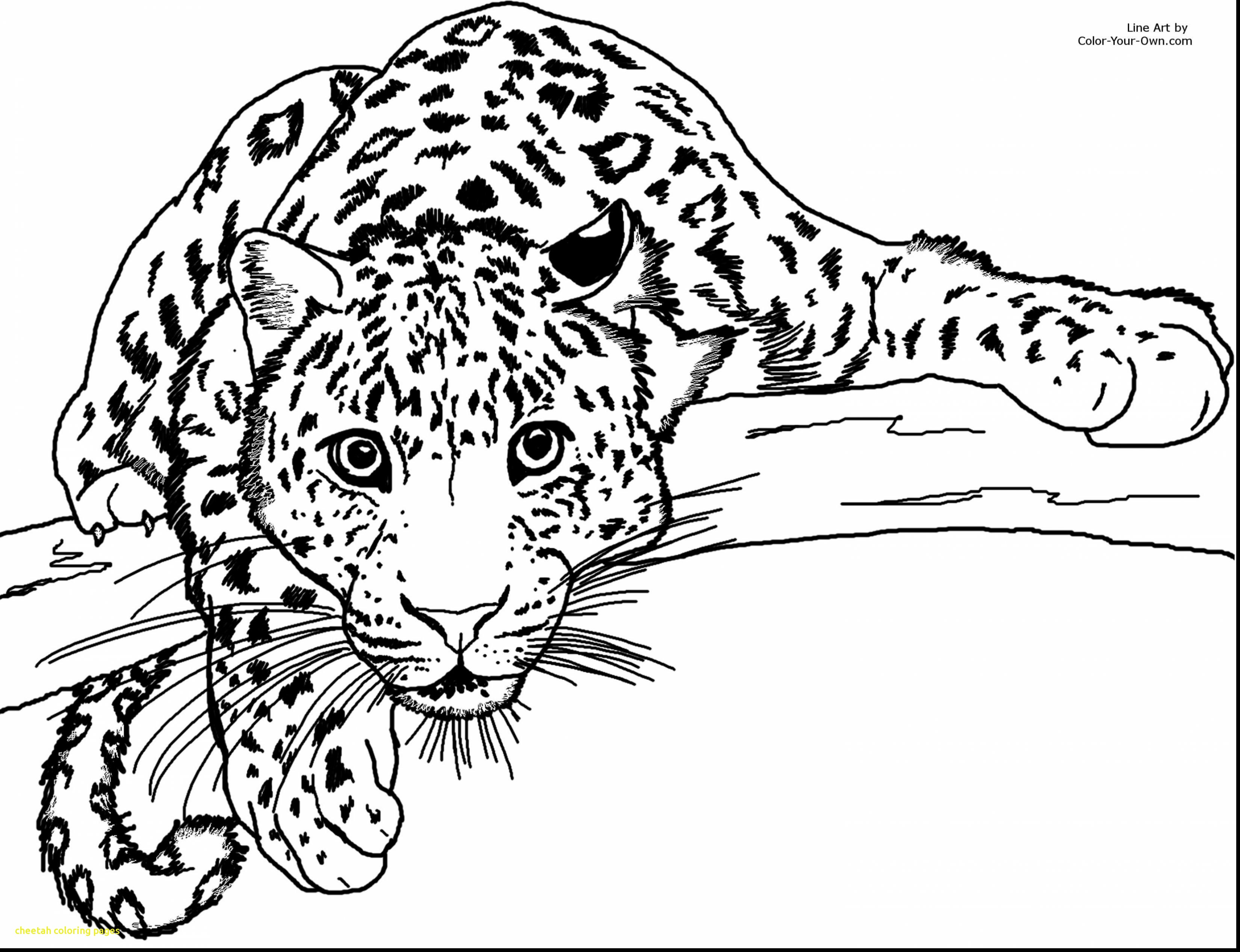 3300x2534 Cheetah Coloring Pages With Drawn Cheetah Coloring Page Pencil